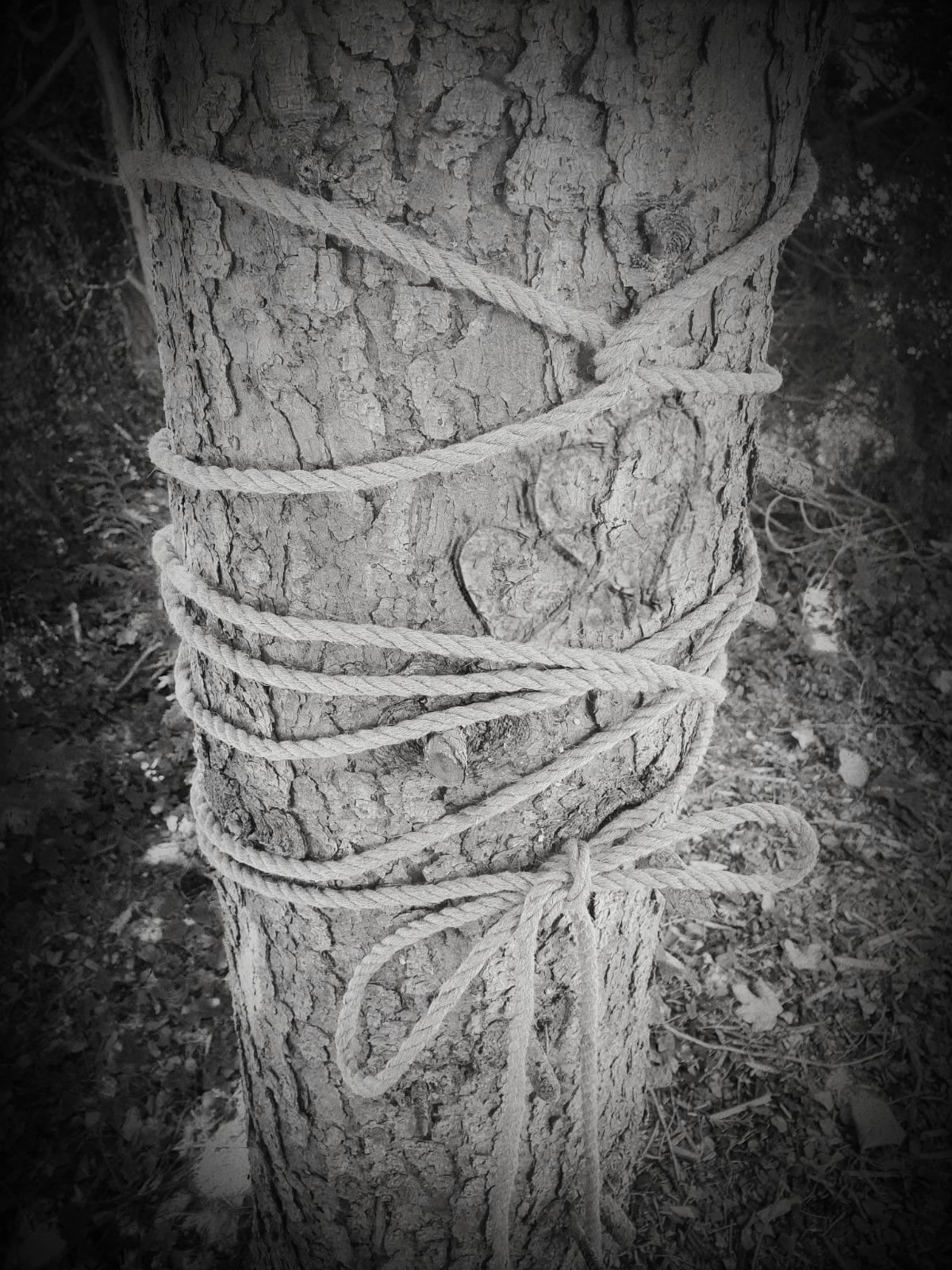 Bondage Baum